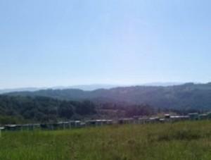 Pcelinjak-Matejica-na-Homoljskim-planinama-300x216